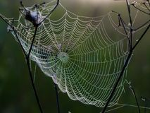 Сеть ` s паука в раннем утре Стоковое Изображение RF