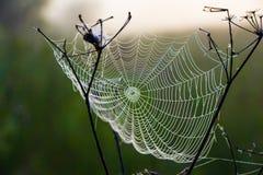 Сеть ` s паука в раннем утре Стоковое Фото