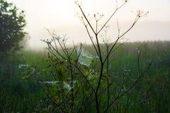 Сеть ` s паука в раннем утре Стоковое фото RF