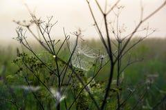 Сеть ` s паука в раннем утре Стоковые Изображения RF
