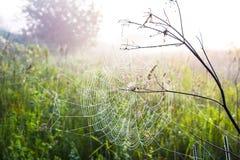 Сеть ` s паука в раннем утре Стоковое Изображение