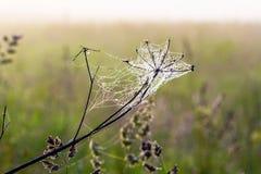 Сеть ` s паука в раннем утре Стоковая Фотография