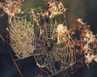 Сеть ` s паука на запачканной предпосылке Стоковые Фотографии RF