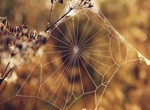 Сеть ` s паука на запачканной предпосылке Стоковая Фотография