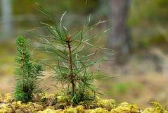 Сеяец дерева Стоковое Изображение