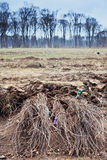 Сеяец дерева на поле Стоковые Изображения RF