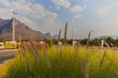 Селективный фокусировать цветка травы стоковая фотография rf
