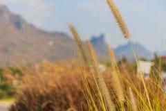 Селективный фокусировать цветка травы стоковые изображения rf