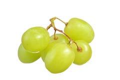 Селективный фокус виноградин зеленого цвета пука изолированных на белизне Стоковая Фотография RF