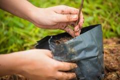 Селективный фокус на левой руке засаживая дерево саженца Стоковая Фотография