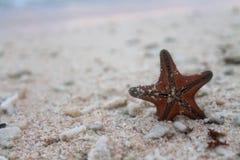 Сели на мель звезда стоковое фото rf