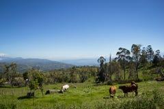 Сельская Колумбия Стоковые Фото