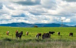 Сельская местность Австралии Стоковые Фотографии RF