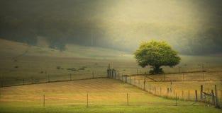 Сельская местность Австралия Стоковые Фото