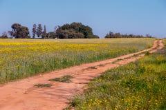 Сельская местность весны Стоковая Фотография