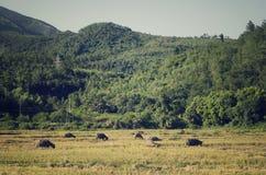 Сельская местность Вьетнама Стоковые Изображения RF