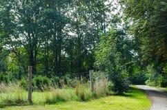 Сельская местность в лете стоковые изображения rf