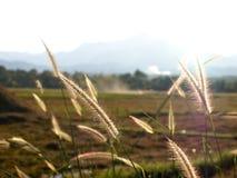 Сельская местность в Таиланде, Азии Стоковые Изображения RF