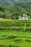 Сельская местность Индонезии на острове Суматры Стоковое фото RF