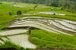 Сельская местность Индонезии на острове Суматры Стоковая Фотография