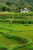 Сельская местность Индонезии Стоковая Фотография RF