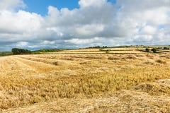 Сельская местность Корнуолла на времени сбора, отрезанные поля сена протягивает к стоковые изображения