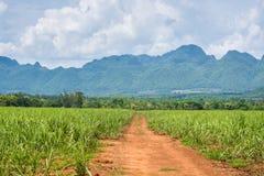 Сельская местность дороги в Таиланде стоковая фотография rf