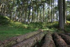 Сельская местность района пика Англии Стоковое Фото