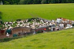 Сельская местность резать овец Бродвей Cotswolds Стоковое Изображение RF