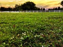 Сельская местность с зеленой травой и белой деревянной загородкой лошади Стоковые Изображения RF