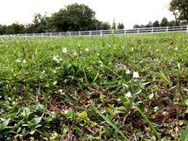 Сельская местность с зеленой травой Стоковые Фото