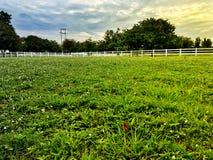 Сельская местность с зеленой травой стоковые изображения rf