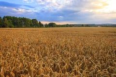 Сельская местность, Чешская Республика Стоковые Фотографии RF