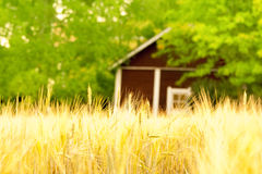 Сельская местность Стоковое Изображение RF