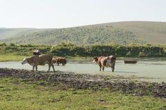 Сельская местность стоковая фотография rf
