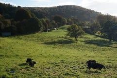 Сельская местность Стоковые Изображения RF