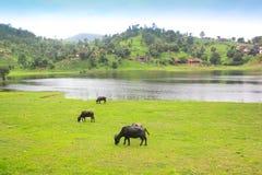Сельская местность Heautiful: Индия Стоковые Изображения RF