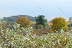 Сельская местность II Коннектикута Стоковое фото RF