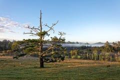 Сельская местность Matakohe стоковое фото rf