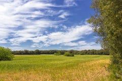Сельская местность Salento, Италии Стоковое Фото
