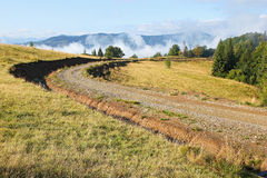 Сельская дорога вдоль края леса стоковое фото rf