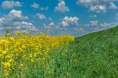 сельская дорога на краю аграрного поля Лето Стоковое Фото