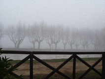 Сельская дорога с чуть-чуть деревьями, туманная зима Стоковые Фотографии RF