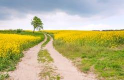Сельская дорога через поле рапса и сиротливого дерева Стоковые Фото