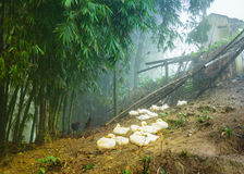 Сельская птицеферма (утка и цыпленок) на деревне зеленого холма Стоковые Фото