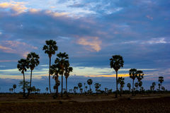 Сельская сцена в Таиланде Небо вечера над полем Стоковое Изображение RF
