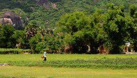 Сельская сцена в Dong Thap, южном Вьетнаме стоковая фотография