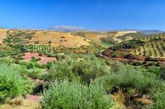 Сельская сцена, Крит, Греция стоковая фотография