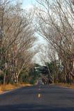 Сельские дороги, Таиланд Стоковая Фотография RF