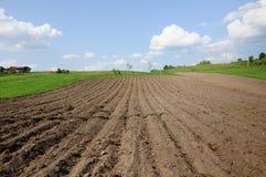 Сельский аграрный ландшафт Стоковая Фотография